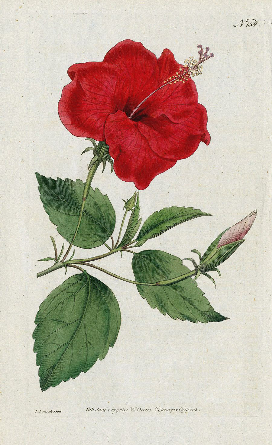 Hibiscus the second best time the best time to plant a tree was 20 years ago the second best time is now izmirmasajfo